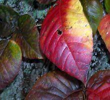 Leaves Climb The Tree by debbiedoda