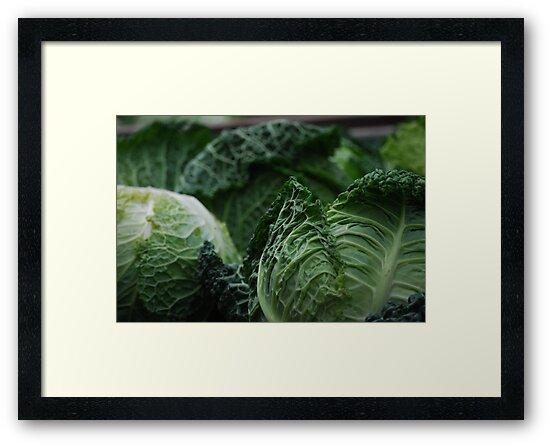 Savoy Cabbage by Rowan  Lewgalon