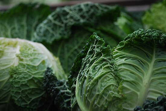 Savoy Cabbage by Rowan  Lewgalon