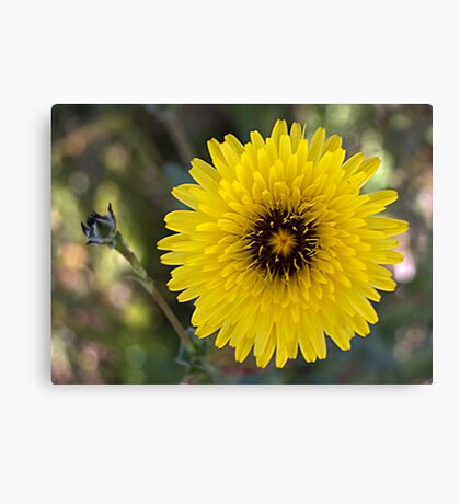 The Humble Flower Canvas Print