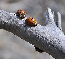 Not Ladybugs by Wabacreek Photography