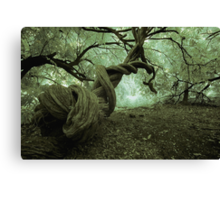 Deep in the woods....... Canvas Print