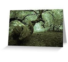 Deep in the woods....... Greeting Card