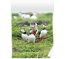 Puffin 07 Poster