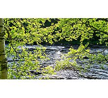 fast river with leaves and trees Photographic Print