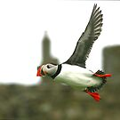 Puffin 09 by dsargent