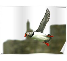 Puffin 09 Poster