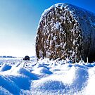 Frozen Hay on a Field of Blue by Seth LaGrange