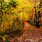 Autumn Path To Nowhere by Curtiss Simpson