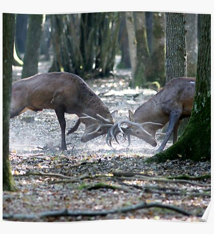 Red deers fighting Poster