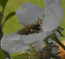 Its a Bee life. by becca2425