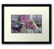 Pink Giants, in the Gold Coast Hinterland Framed Print