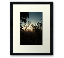 foggy swamp Framed Print