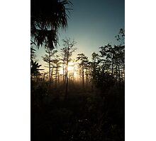 foggy swamp Photographic Print