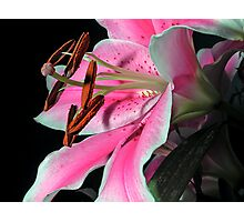 Lily on Black Photographic Print