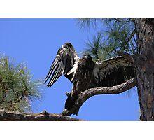I am eagle bird Photographic Print