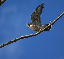 preparing for take off by kathy s gillentine