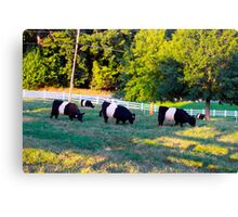 Grazing In The Grass Cows Canvas Print
