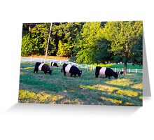 Grazing In The Grass Cows Greeting Card