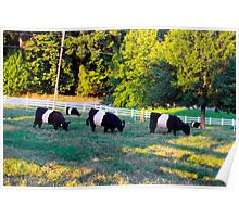 Grazing In The Grass Cows Poster