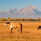 The Open Range by Gary Lengyel