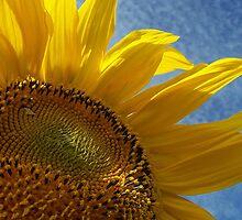 You are my sunshine by Yanira Greener