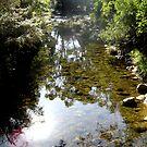Morning Sun at Eurobin Creek by Natalie Ord