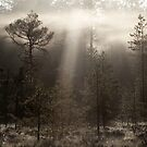 26.5.2015: Morning Mist's Moment by Petri Volanen