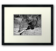 grey nomad Framed Print