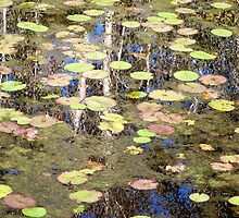 Swamp Lillies by Natalie Ord