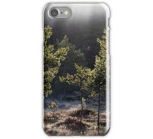 26.5.2015: Pine Trees, May Morning iPhone Case/Skin