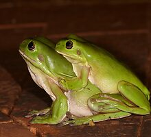 Two green tree frogs (Tara Ridge) by Steve Axford