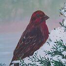 Red Grosbeak in acrylic by MaeBelle