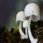 Fungi - 2010 by Steve Axford