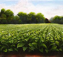 Tobacco Field near Creedmoor, NC by Duane Dorshimer