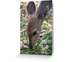 Female Bushbuck Close Up Greeting Card