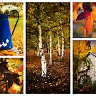 Wandering in autumn by Louise Cooke