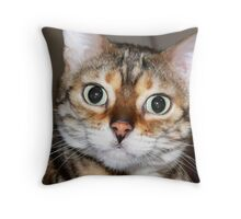 Ziggy, DeMille is ready for your close up! Throw Pillow