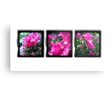 Through the Viewfinder Triptych Metal Print