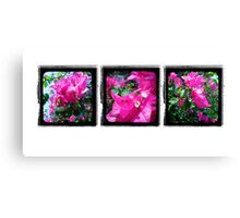 Through the Viewfinder Triptych Canvas Print