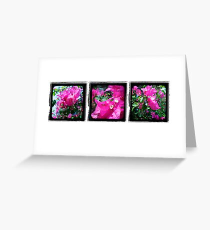 Through the Viewfinder Triptych Greeting Card