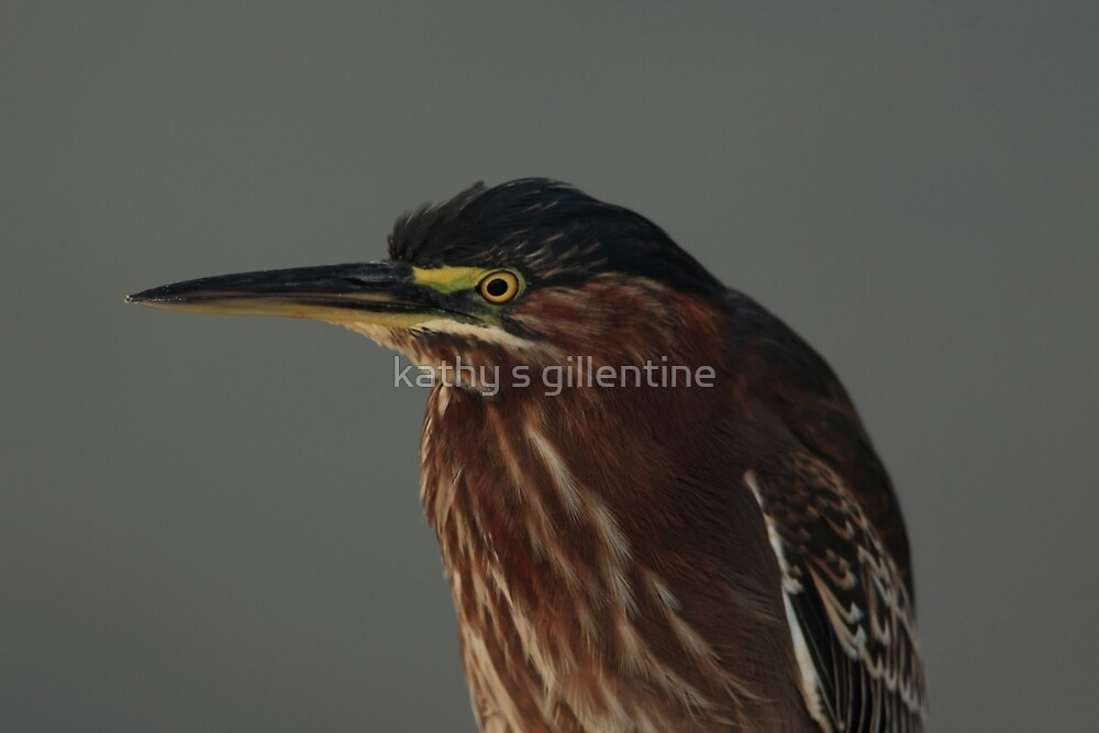 Green Heron by kathy s gillentine