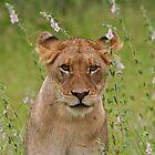Lioness With Flowers by Jared Bloom