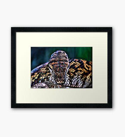 Monty the Python Framed Print