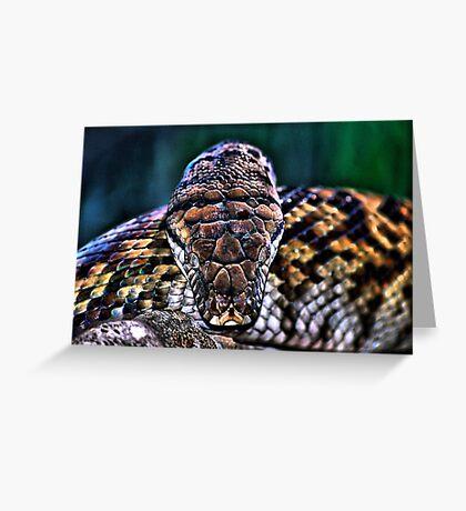 Monty the Python Greeting Card