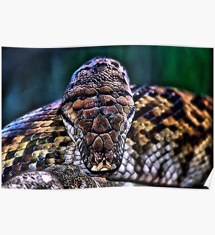 Monty the Python Poster