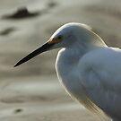 Snowy egret by kathy s gillentine