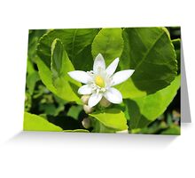 Blossom on a Lemon Tree Greeting Card
