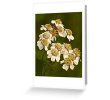 hoverfly on flower Greeting Card