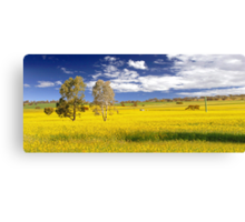 Canola Field In Spring  Canvas Print